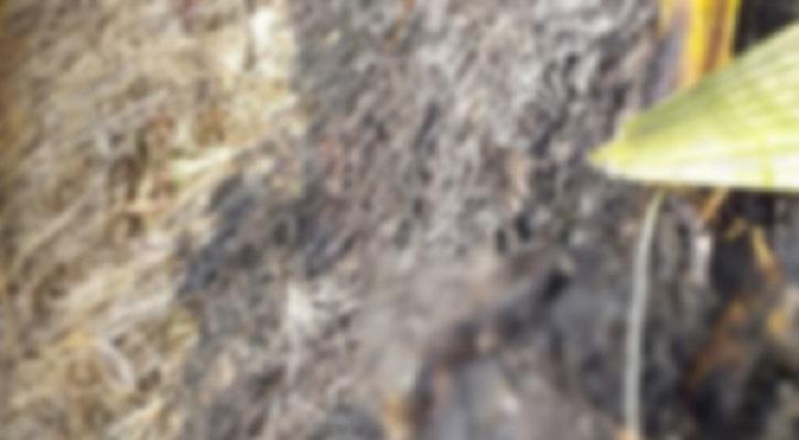 তরুণীকে হত্যার পর আগুনে পোড়ানো হলো মরদেহ